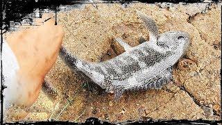 peces  en zona rocosa capturados con krill !