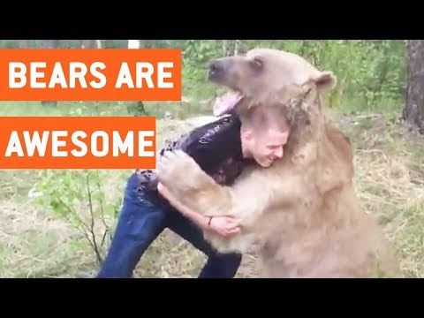 Funny Bears Video Compilation || JukinVideo