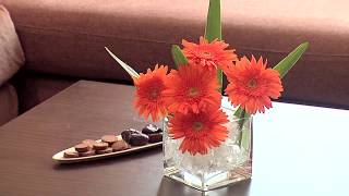 CORP Executive Hotel Apartments, Al Barsha, Dubai, UAE - Unravel Travel TV