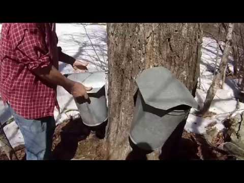 Making Vermont Maple Syrup