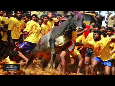 Jallikattu Supporters To Opt For NOTA In Tamil Nadu Assembly Election
