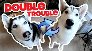 How My 2 Siberian Huskies Like To Have Fun!!