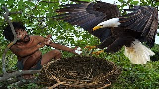 A forest man found a eagle nest on the higher tree - steal eagle eggs and cooked in mountain hole