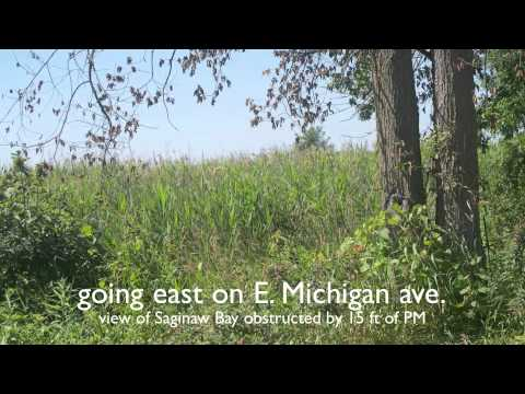 Phragmites in Arenac County, {Sims, Whitney Township and Au Gres}