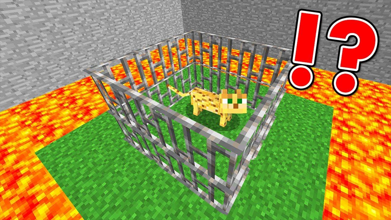 Saving Minecraft Cat