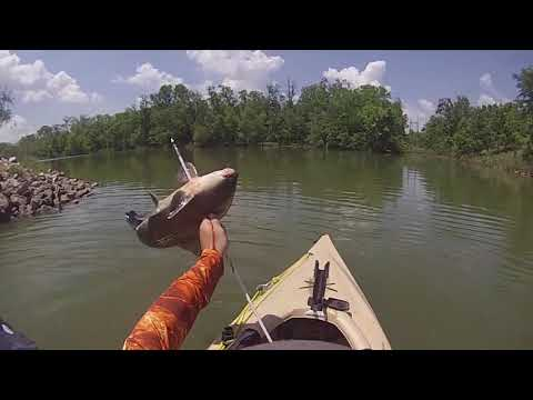 Bowfishing From The Kayaks