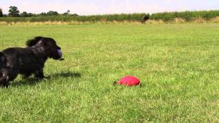 Dog Training Video: What Your Dog Sees