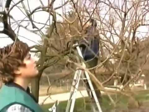 Carlo pagani lezione sull 39 oleandro funnycat tv for Oleandro riproduzione