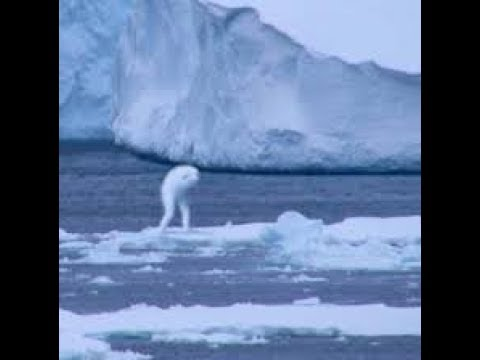 ANTARCTICA  IS NOT WHAT YOU HAVE BEEN TOLD - THIS WILL BLOW YOUR MIND - Flat Earth Messenger