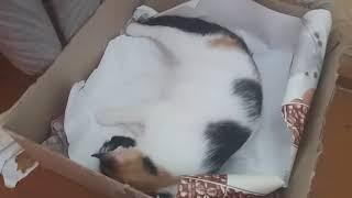 Кошка-первородка рожает 1 часть
