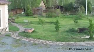 газон из одуванов