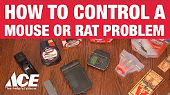 How to Control a Mouse or Rat Problem - Ace Hardware
