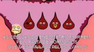 Ciclo Menstrual VERSIÓN ANIMADA
