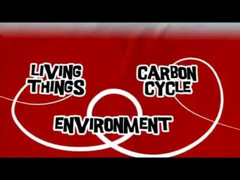 AQA GCSE BBC Bitesize - The Carbon Cycle
