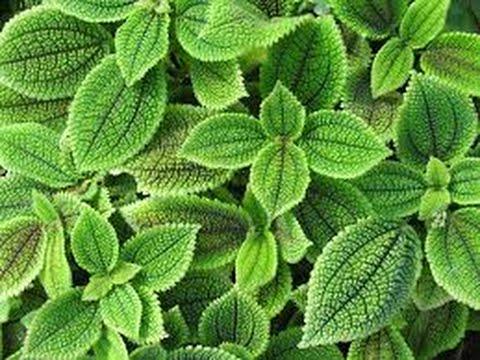Tejidos vegetales - Biología