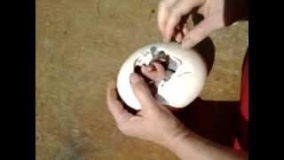 kerekféreg tojások gyermekekben)