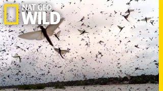 Mayfly Madness | Wild Mississippi
