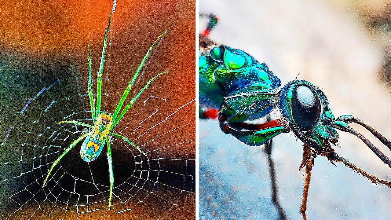9 невероятных существ, умеющих контролировать разум