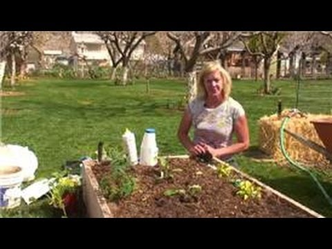 Vegetable Gardening How To Keep Snails Out Of A Vegetable Garden Youtube