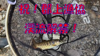 2020年郡上漁協管内渓流釣り解禁しました!長良川や小駄良川で成魚放流が行われました!