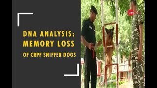 DNA Analysis: Memory Loss Of CRPF Sniffer Dogs