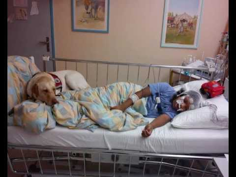 A Child and her Autism Service Dog