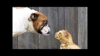 Собаки против кошек! Собаки и кошки боевые действия играя -)