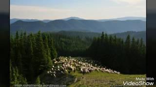 Puiu Codreanu- Socrul meu e cioban