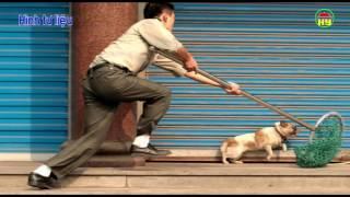 Xã Quảng Châu: xảy ra nhiều vụ mất trộm chó.