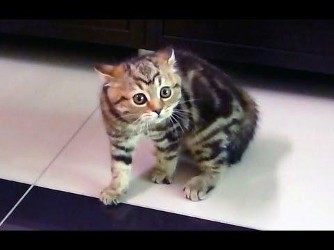 Happy Halloween ! Funny Kitten Dance