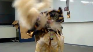 Japanese Kabuki - The Lion Dance