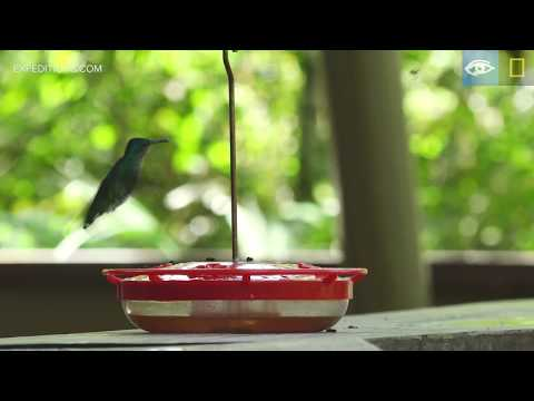 Rain Forest Discovery Center | Costa Rica & Panama | Lindblad Expeditions-National Geographic