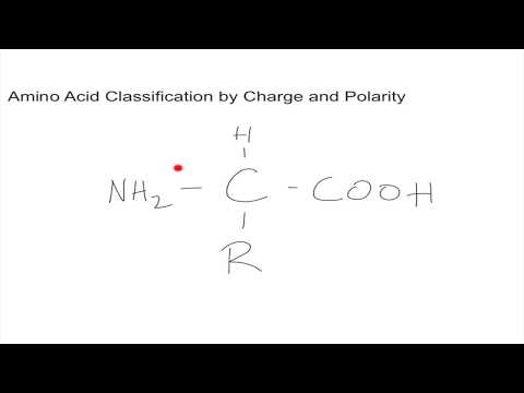 Classification of Amino Acids by Charge and Polarity