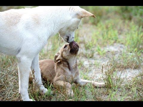 Amazing Cute Puppys Future Gun Dog Vlog