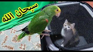 شيصير اذا حطيت ببغاء مع قطة لاول مرة ؟ ميزو واخته الجديدة !!