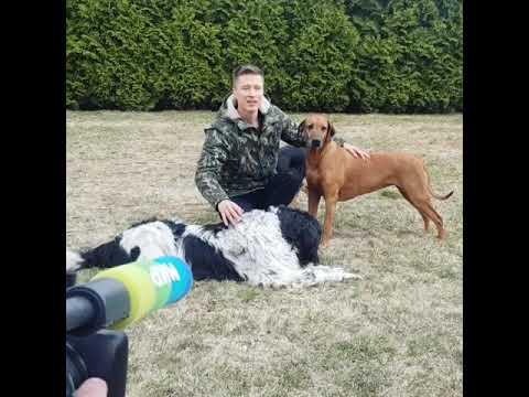 Дмитрий Нестеров о своих собаках телеканал МИР