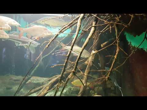 European River Fish Tank