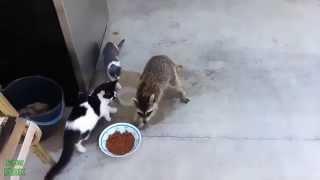 Смешные видео-ролики о животных.