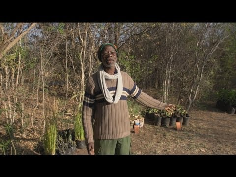 Faces Of Africa - Uncle Ben and the Treevolution