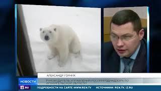 видео: Жительница Новой Земли сняла на видео нашествие агрессивных медведей