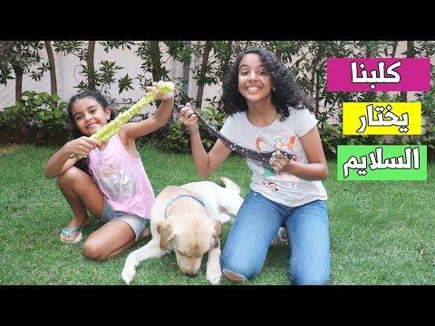 كلبنا يختار مكونات السلايم -- الكلب عمل فينا مقلب 😱 -- our dog picks our slime