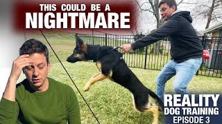 We need to talk... This will NOT be easy. Reality Dog Training Episode 3