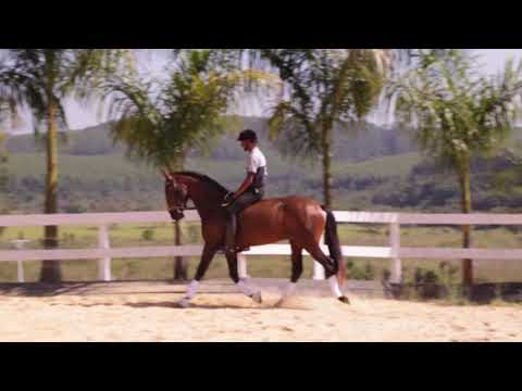Lote 09 Nobre OA Cavalos puro sangue Lusitanos - Coudelaria aguilar