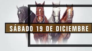 Vidéo de la course PMU TORITO H