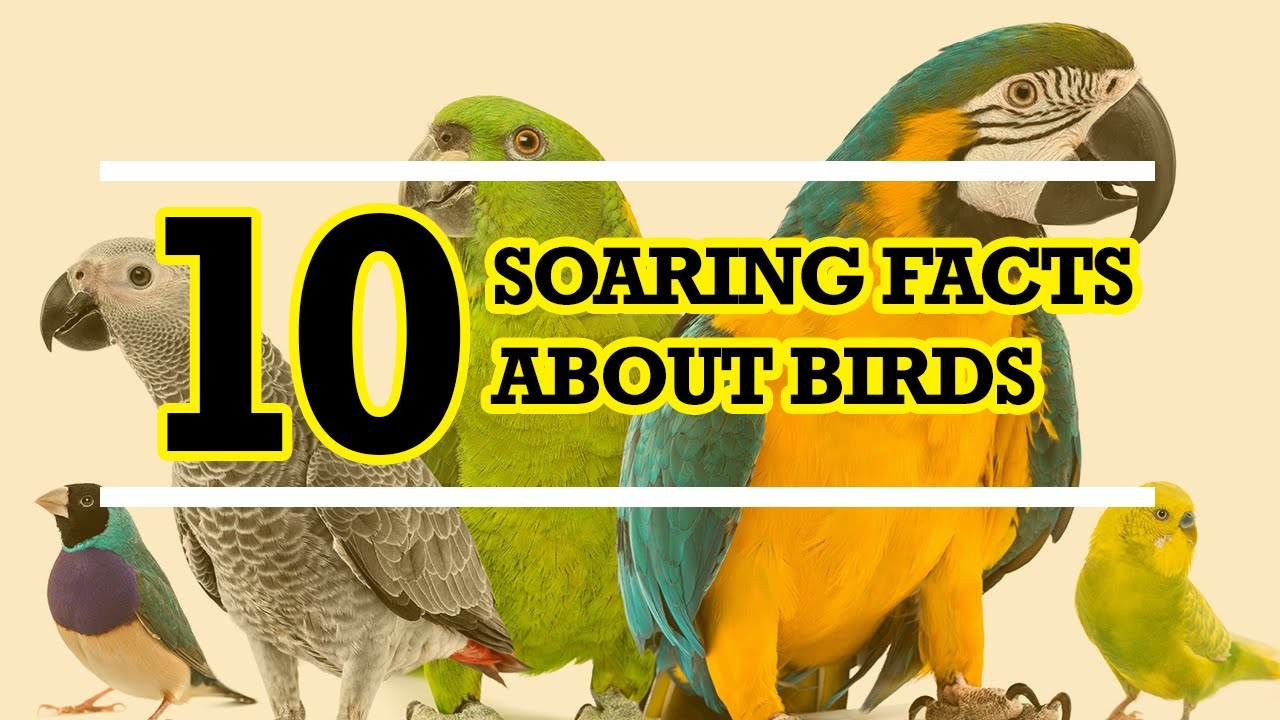 103 colorful bird facts interesting facts about birds