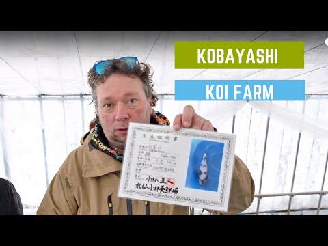 Kobayashi Koi Farm