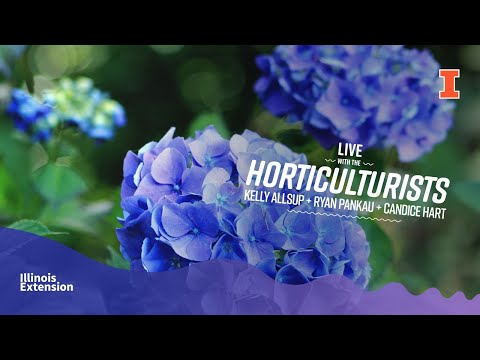 LIVE With The Horticulturists: All About Hydrangeas