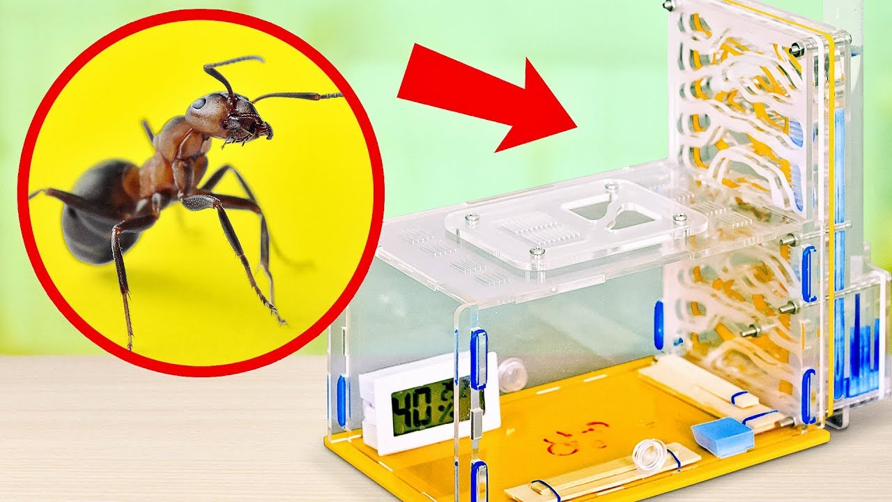 How To Build An Ant Farm At Home Youtube