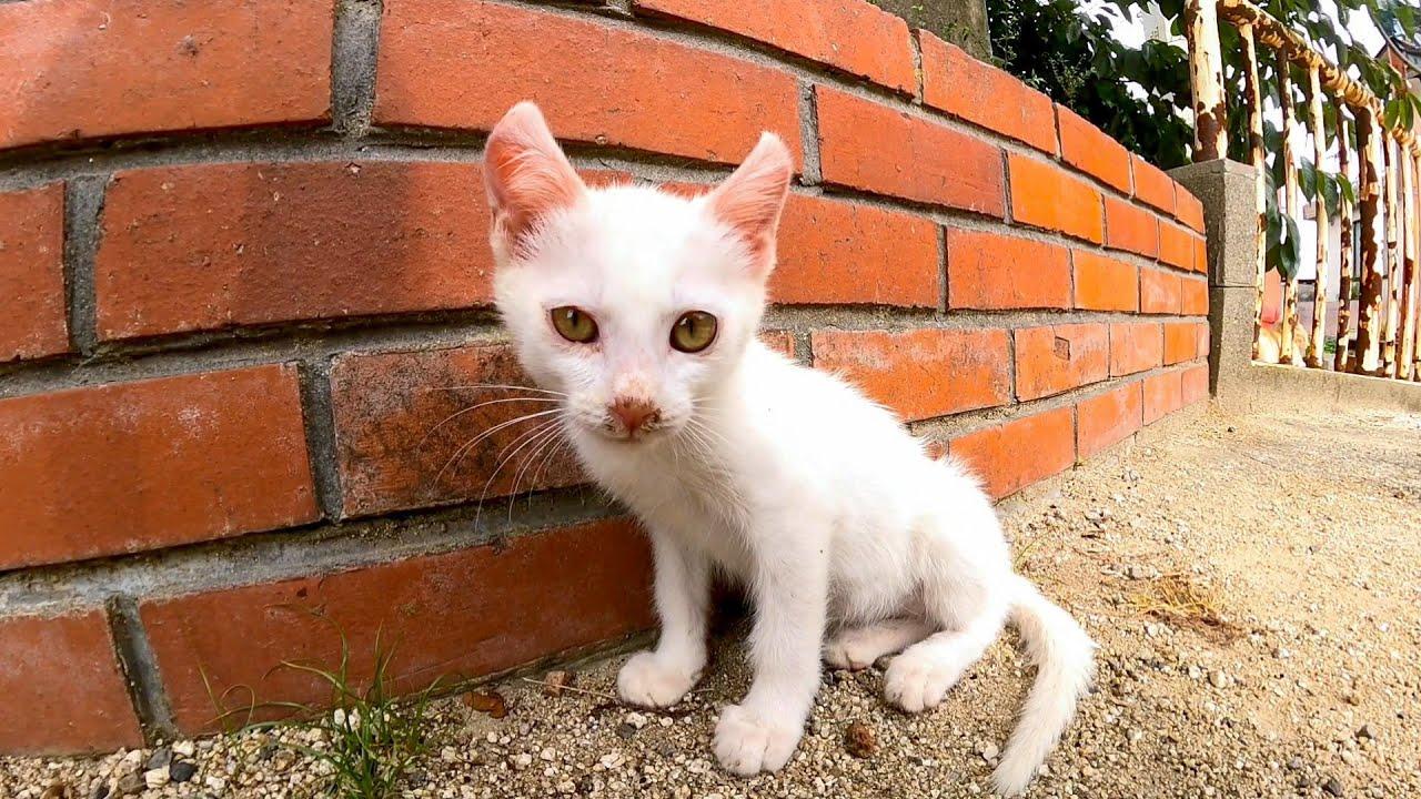 近くに行くと人の足に寄りかかって休もうとする子猫の白猫が可愛過ぎる