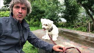 Training the Retrieving dog, Raw diet for House Breaking and more